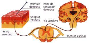 Diagrama de la fisiología del dolor